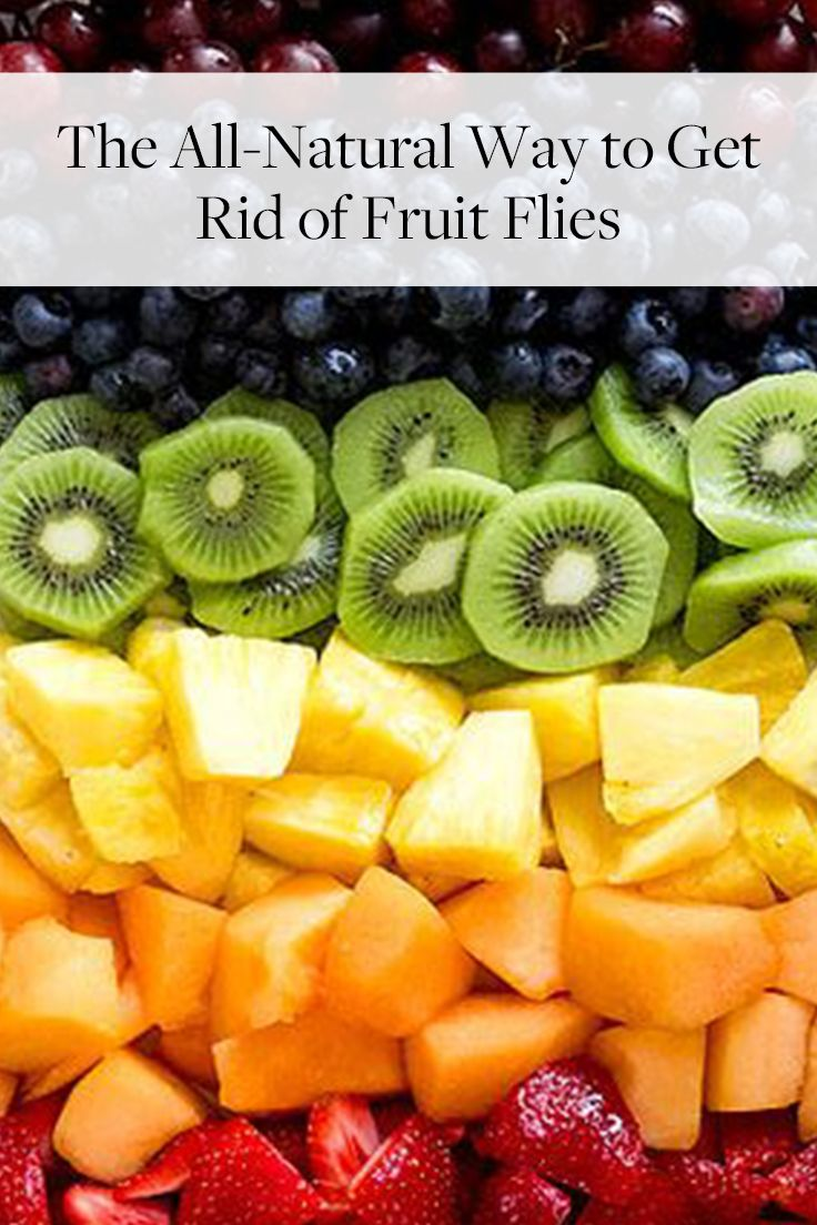 The allnatural way to get rid of fruit flies no brainers