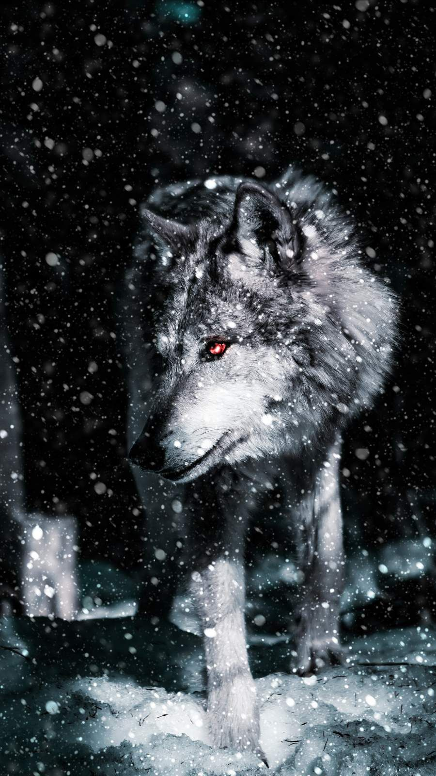 Alpha Wolf iPhone Wallpaper in 2020 Cool wallpapers for