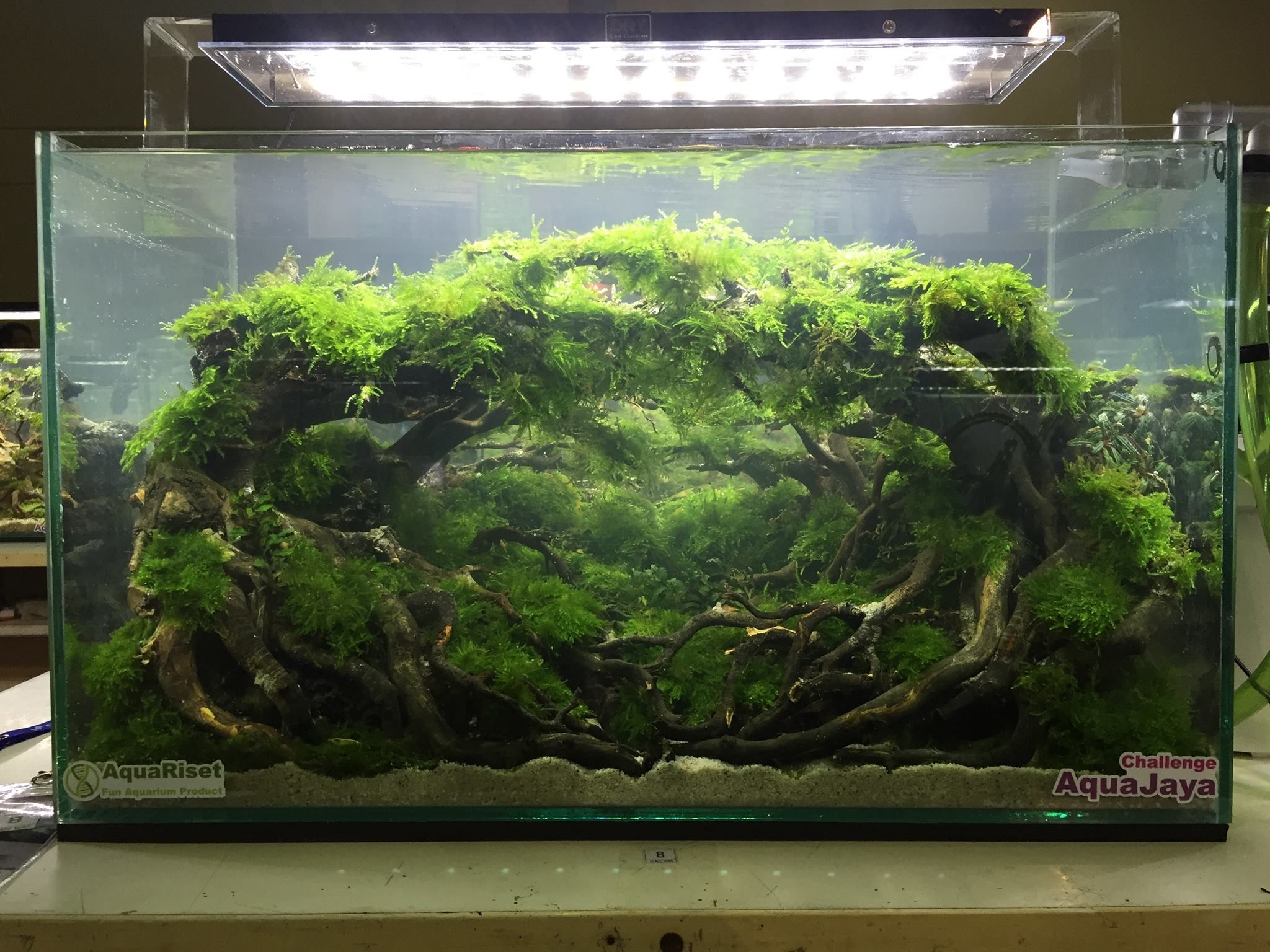 Stan Chung - Stunning aquascapes in the best live scaping ...