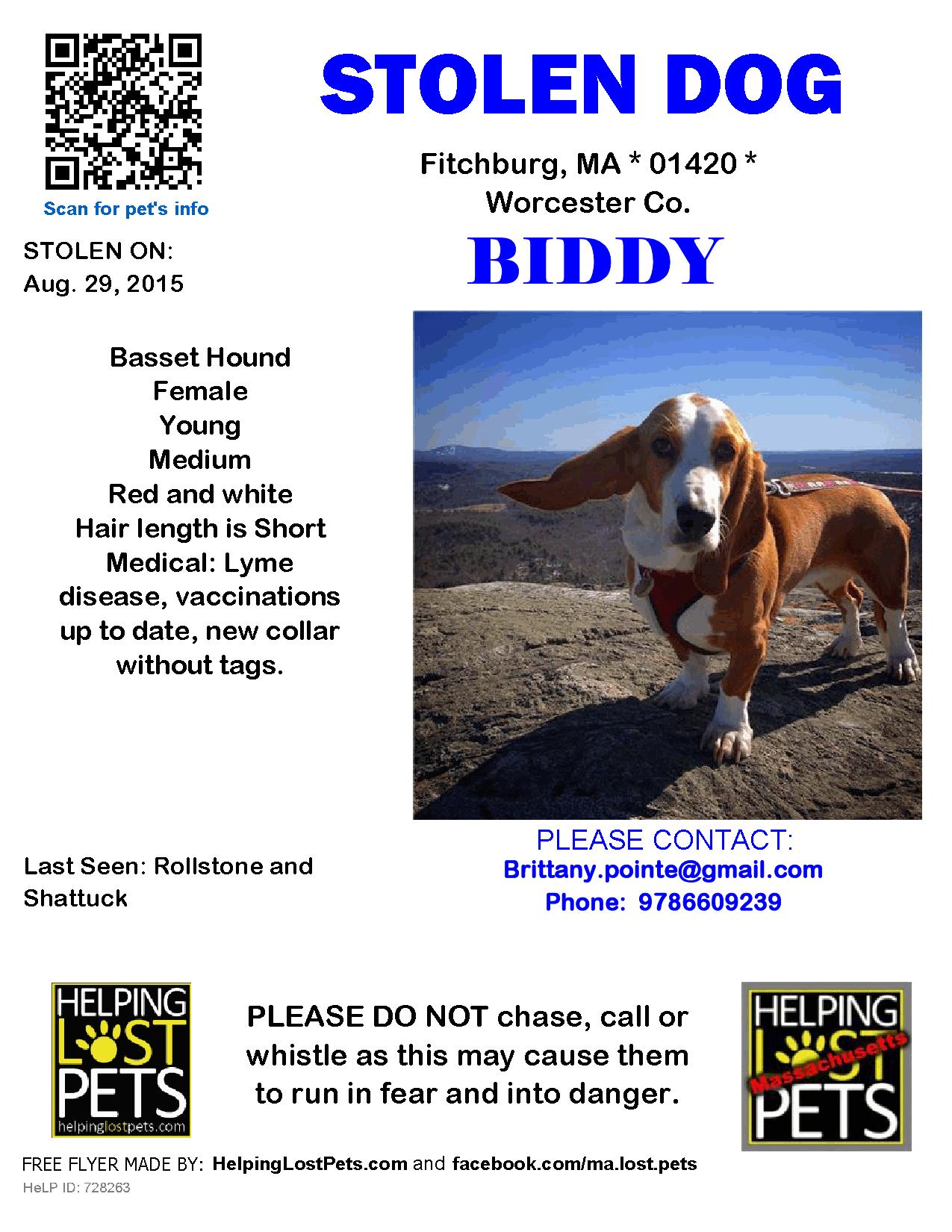 Stolen Dog Basset Hound Fitchburg Ma United States 01420 Basset Hound Losing A Dog Basset