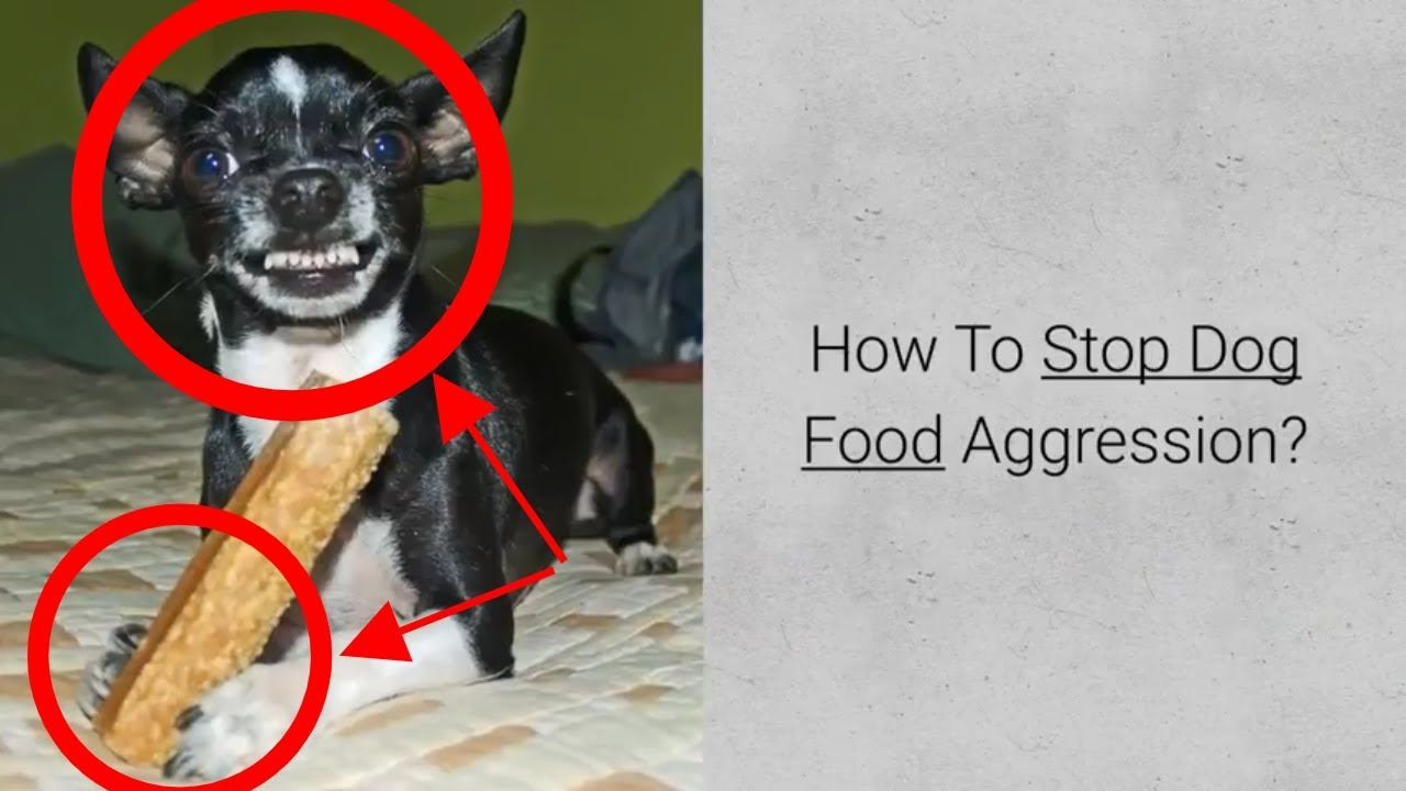 How to stop dog food aggression check 4 steps in food