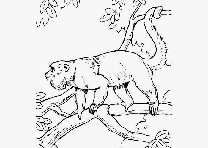Howler Monkey Coloring Google Search Stencil Monkey Coloring