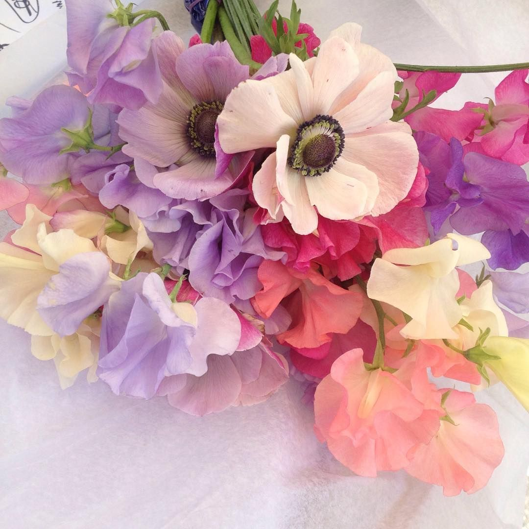 dreamy sweet peas & anemones in a soft pastel palette by ...