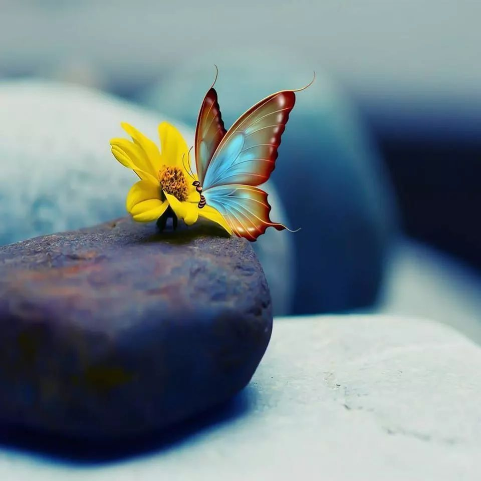 Pin by Soso on صوري   Butterfly pictures, Beautiful ...