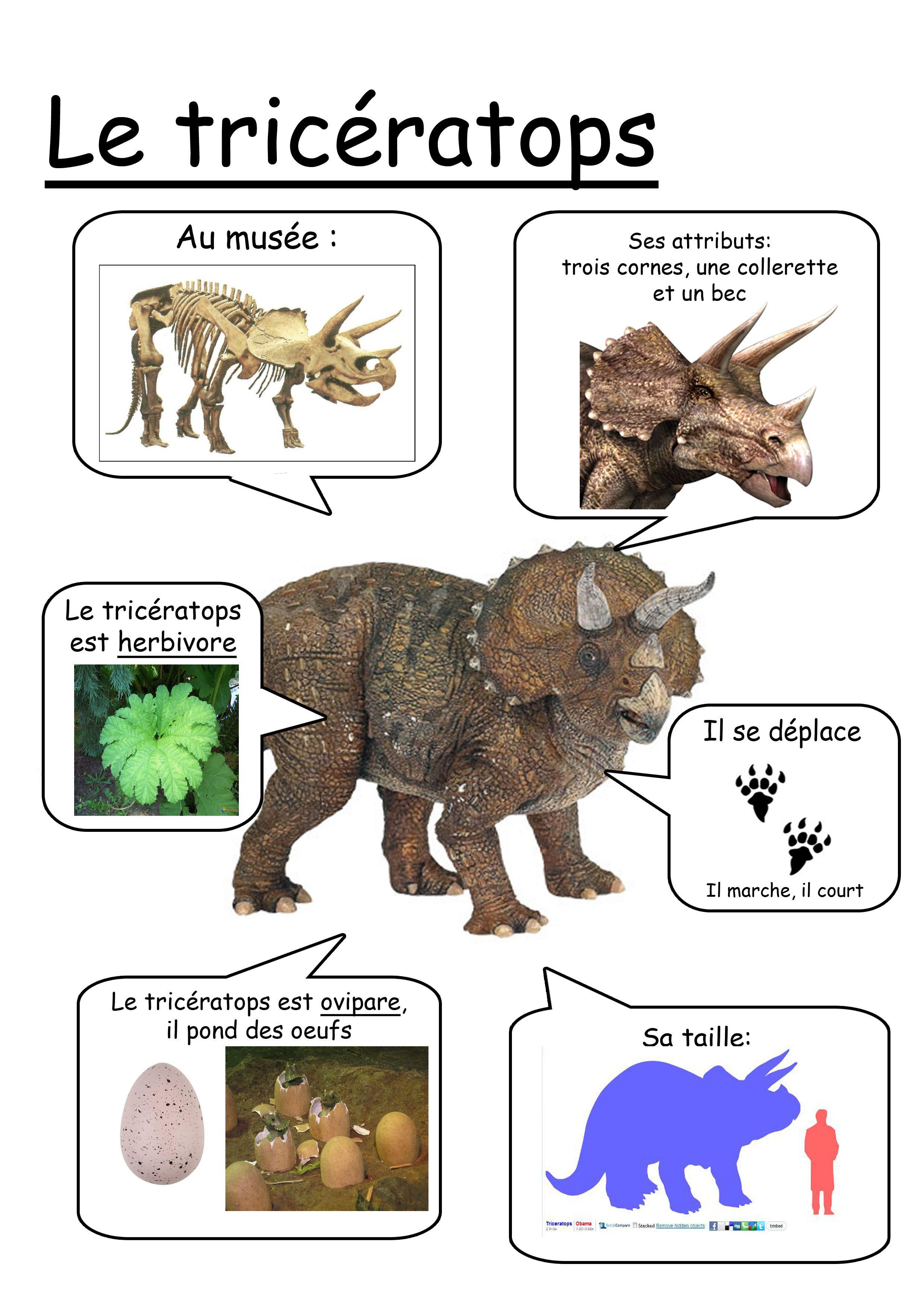 Fiche Triceratops