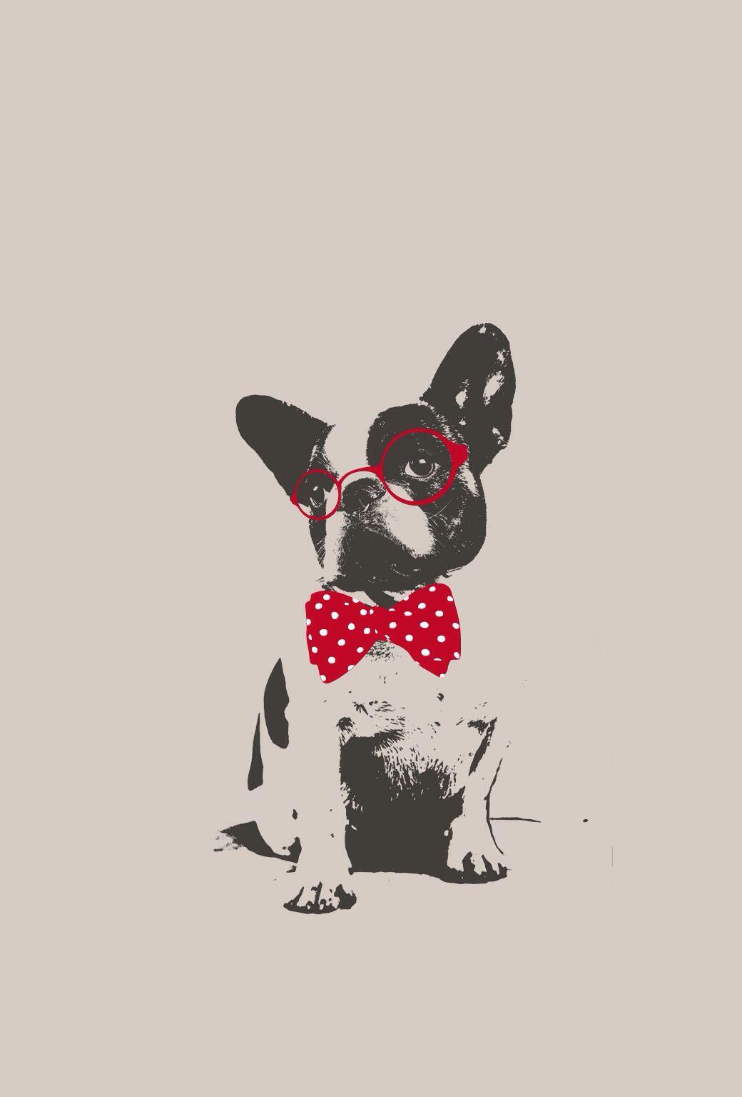 Bulldog Iphone 5 Dog Wallpaper Iphone Dog Wallpaper French