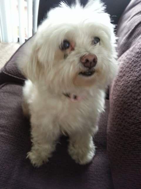 Lost Dog Female Orlando Fl Usa 32807 Losing A Dog Dogs