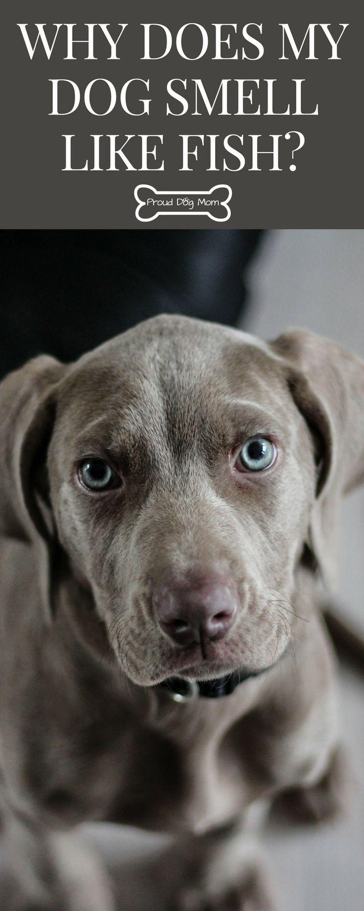 Why Does My Dog Smell Like Fish? Dog smells, Dog health