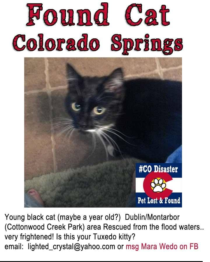 Found Black Cat With White Under Chin And On Socks Coloradosprings Coflood Copets Please Share Found Cat Black Cat Cats