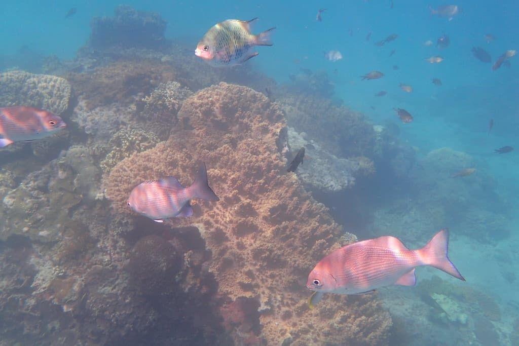 Diving in Padang Bai