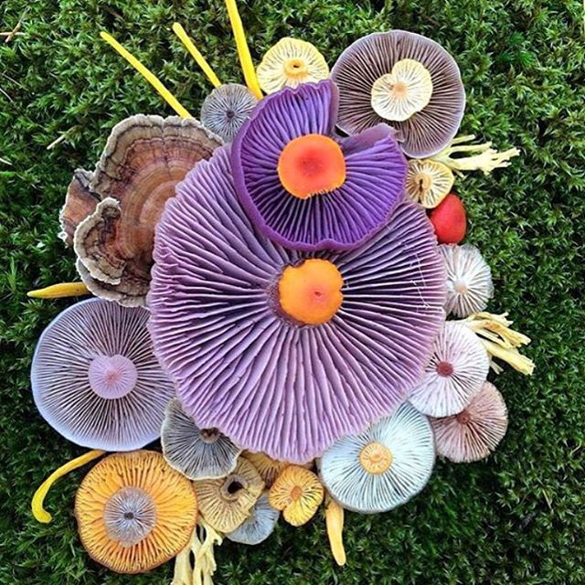 Nature wins. Every single time.  Otherworldly mushrooms, you have my heart.  @jill_bliss via @v_keen