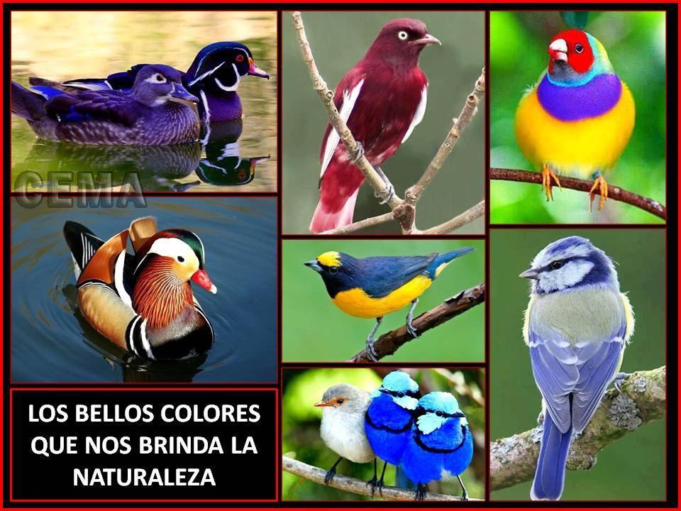 Varios colores de la naturaleza