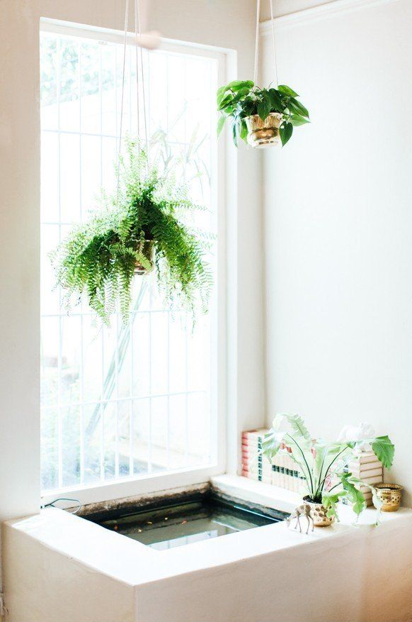 Love this idea of an indoor fish pond! | Great Ideas | Pinterest ...