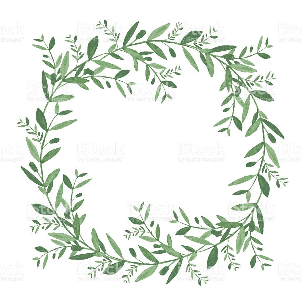 Watercolor Olive Wreath Isolated Vector Illustration On White B Royalty Free Stock Vector Art Wreath Watercolor Wreath Illustration Wreath Drawing