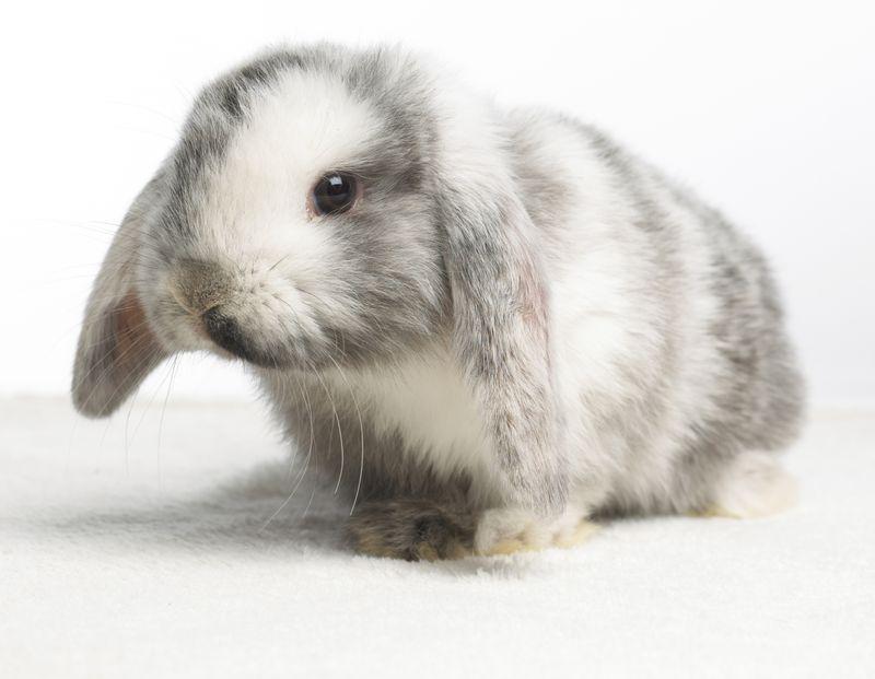 Pet Rabbit Names That Start With A Through E Rabbit Names Cute Pet Names Pet Rabbit