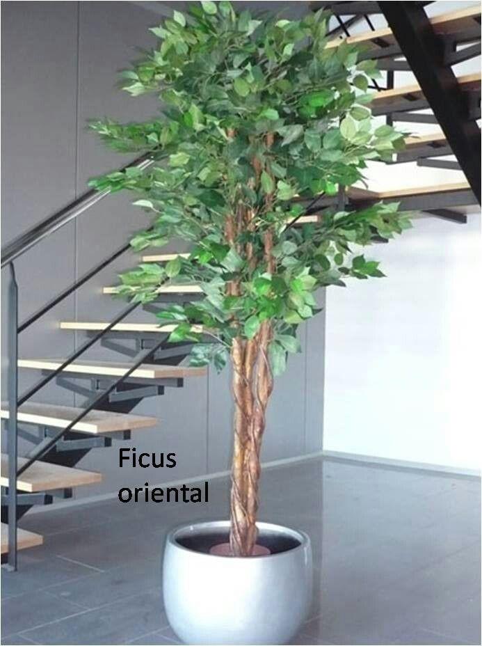 Decoraciones artificiales para restaurantes oficinas y - Arboles artificiales ...