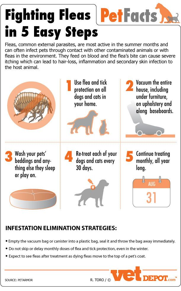 How To Fight Fleas In 5 Easy Steps Dog Infographic Fleas Dog Care Tips