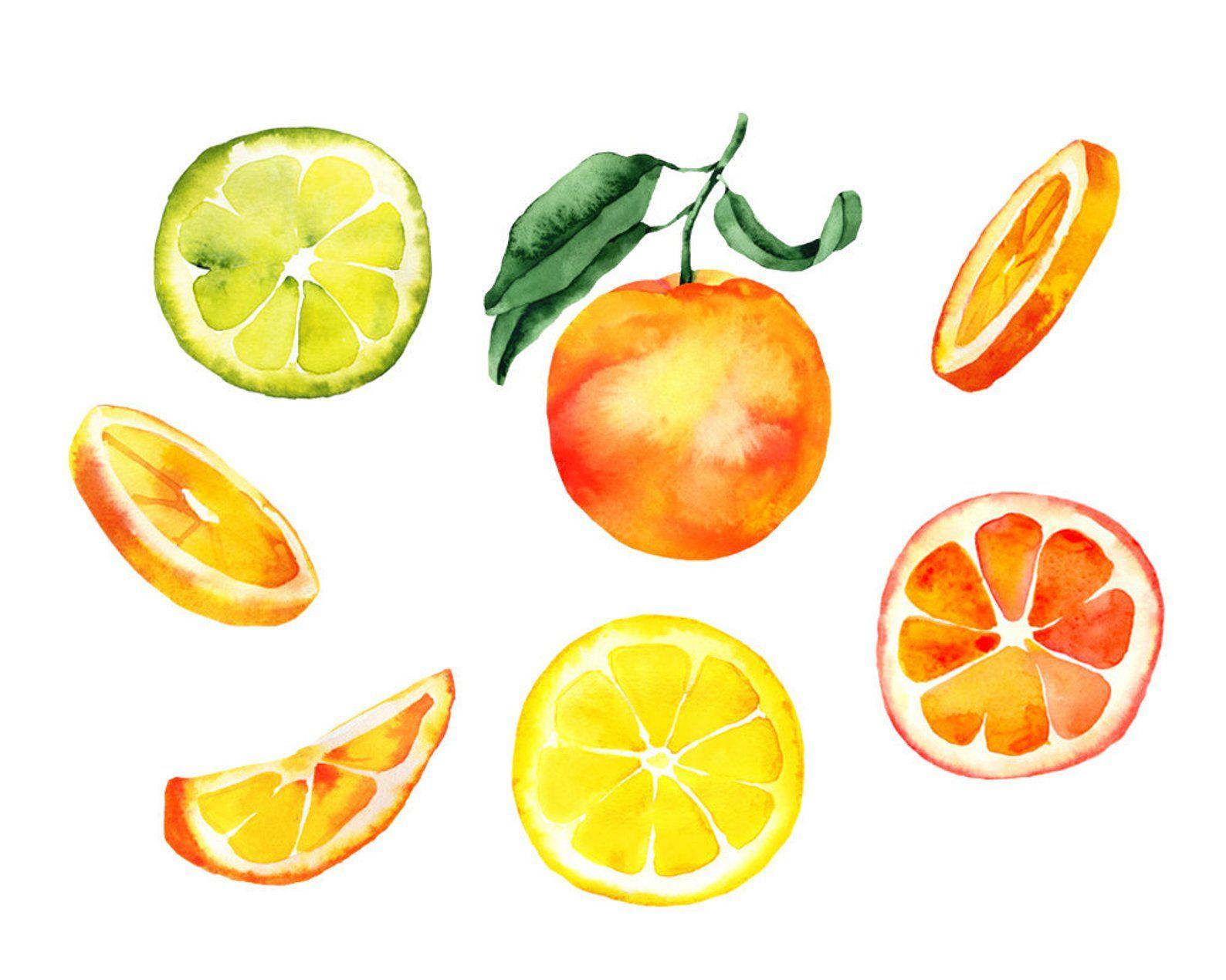Oranges Watercolor Clipart Orange Illustration Watercolor Etsy