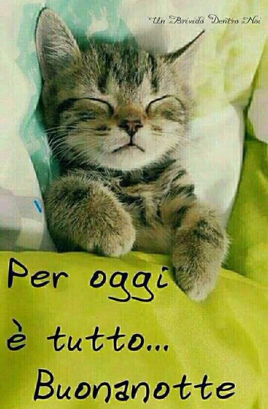 Buona notte buongiorno buonanotte pinterest notte for Buongiorno con gattini