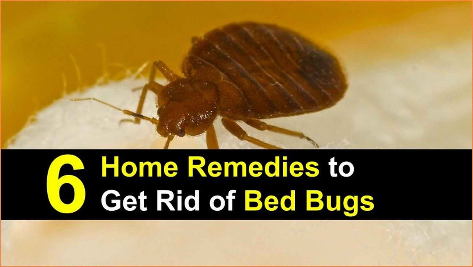 Is There A Home Remedy For Bed Bugs Bed bugs, Rid of bed