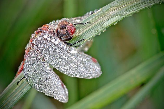 Macrofotografía de Insectos Cubiertos de Rocío por David Chambon | FuriaMag | Arts Magazine