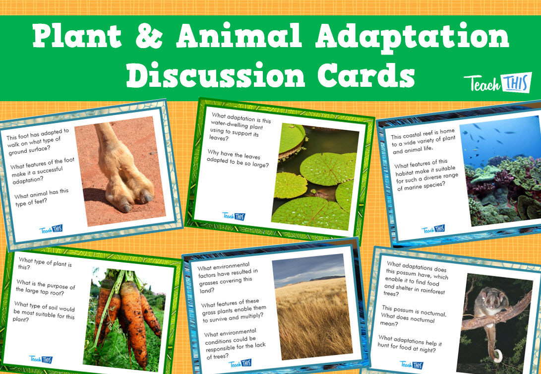 Plant & Animal Adaptation Discussion Cards Set of 24