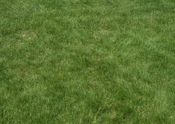 60 Best Photoshop Grass Textures Free Psd Download Reseeding