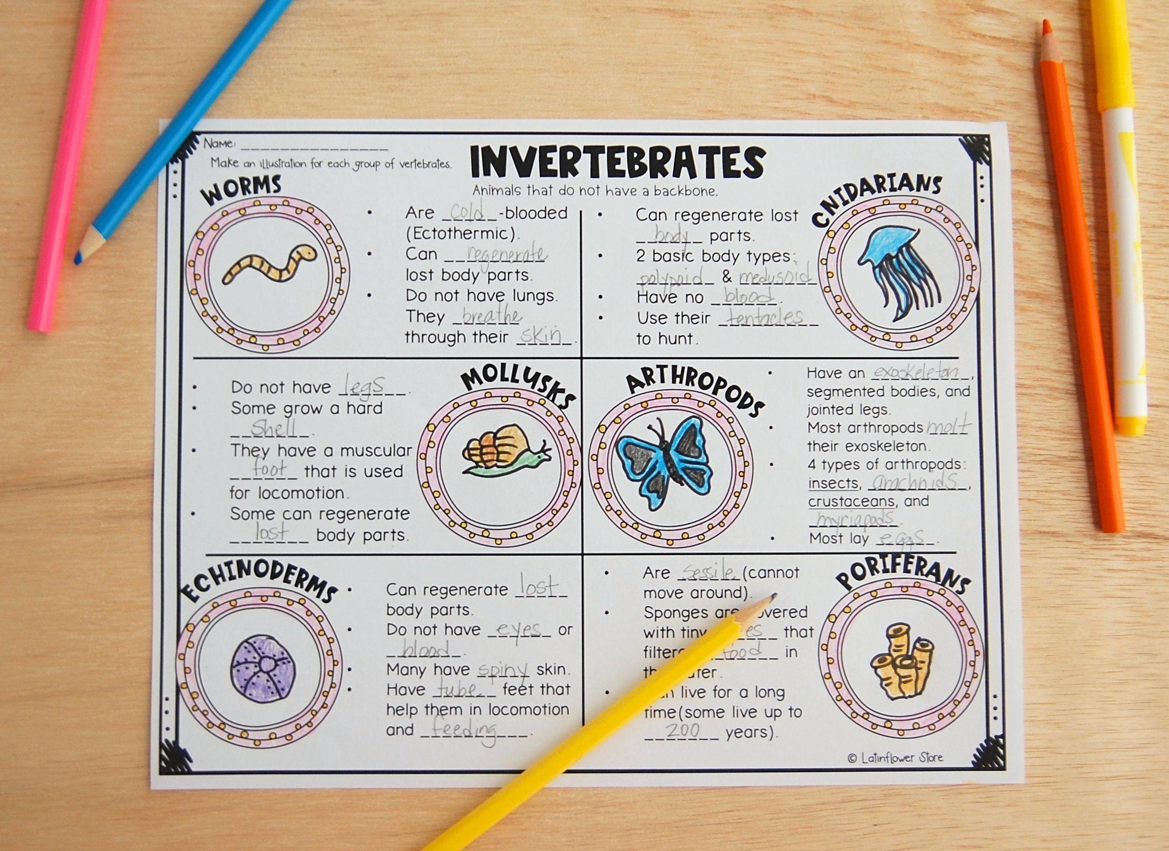small resolution of Vertebrates \u0026 Invertebrates Visual Notes   Science clipart