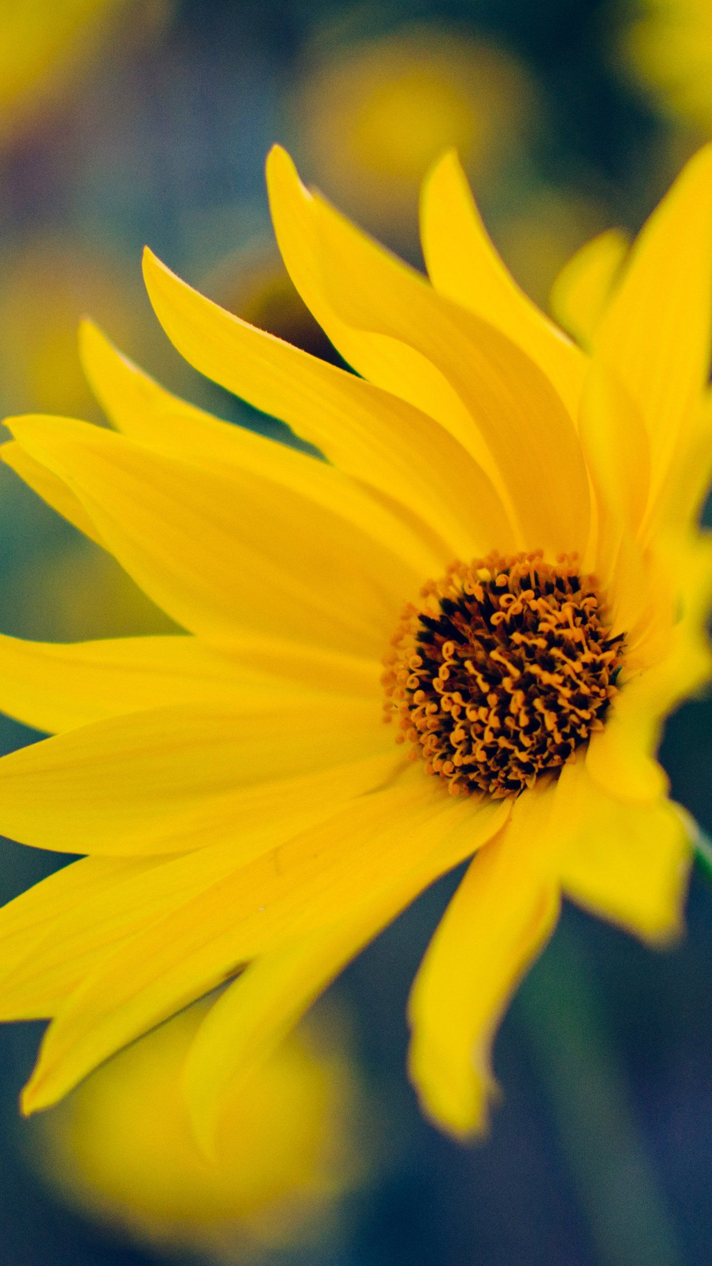 Yellow Flower Wallpaper Iphone Android Desktop Backgrounds