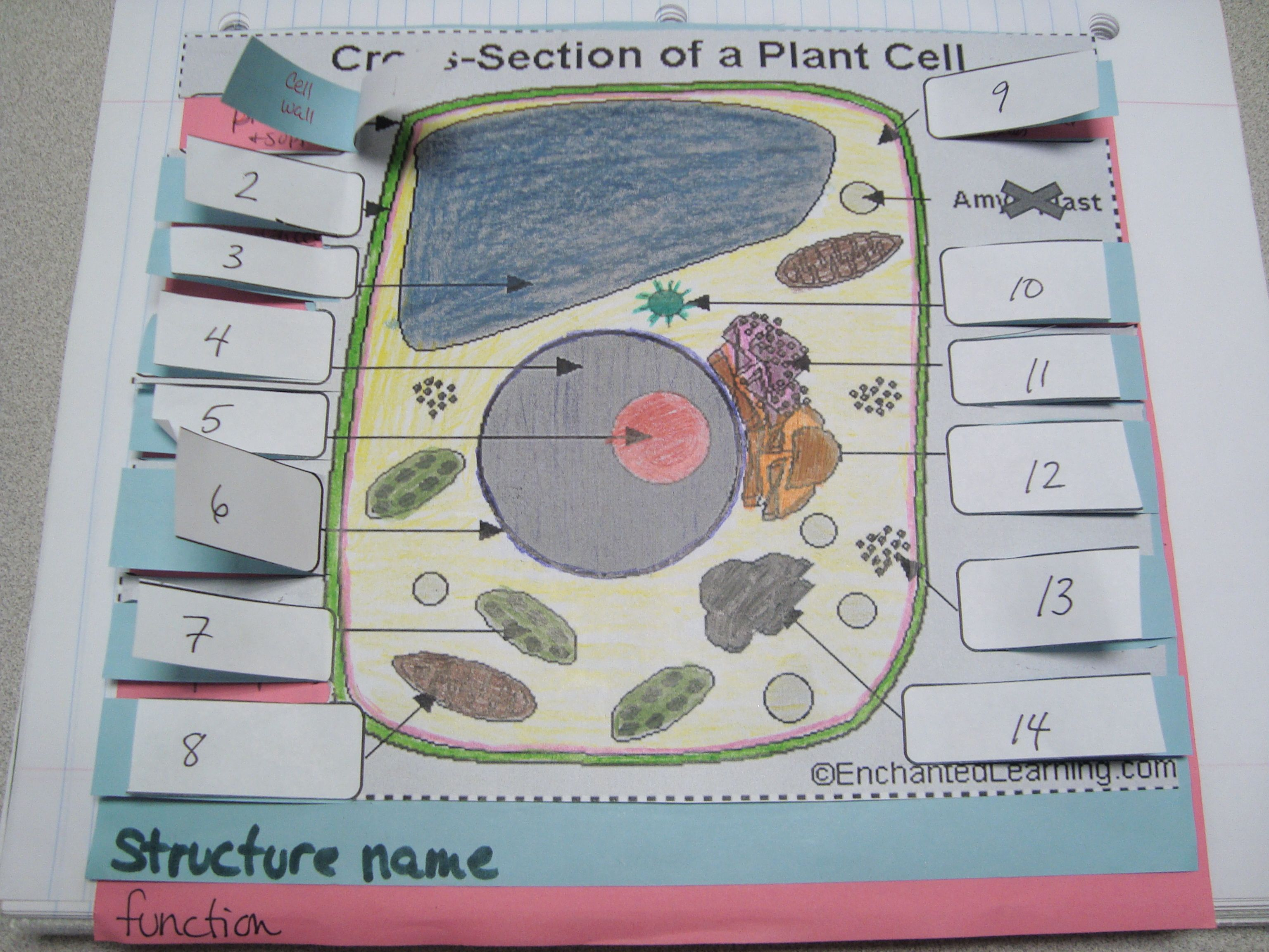 Cell Foldables Plant And Animal Cells Mccarter Biology Chapter 7 Simple Diagram Labeled For Kids Structure Function