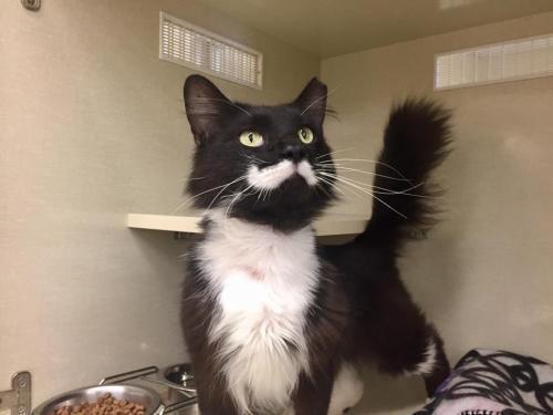 Adopt Mosher At Petco On Petfinder Cat Adoption Petco Adoption
