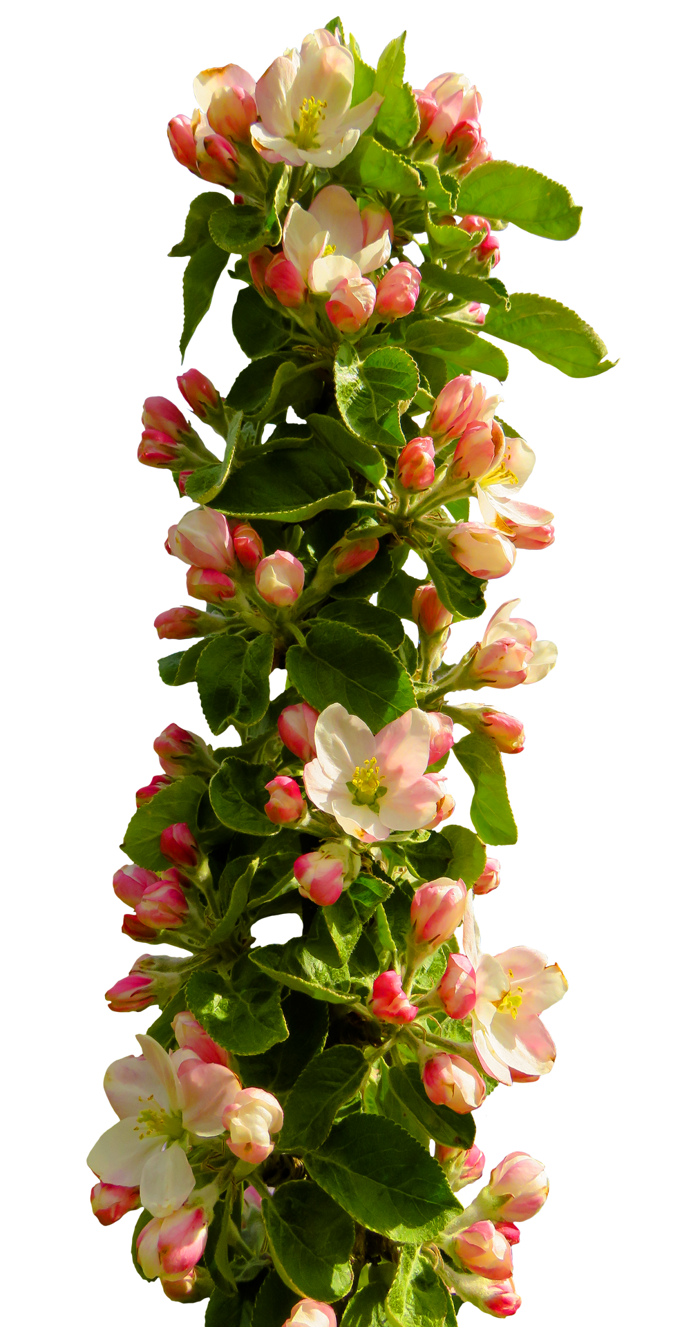 Spring Flower PNG Image (With images) Flower bouquet png