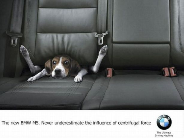 Hilarious Bmw M5 Ad Check It On Our Blog Funny Dog Photos Dog Quotes Funny Best Ads