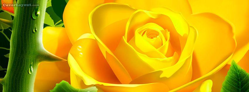 Yellow Rose Facebook Cover Yellow Roses Yellow Flower Wallpaper Beautiful Roses