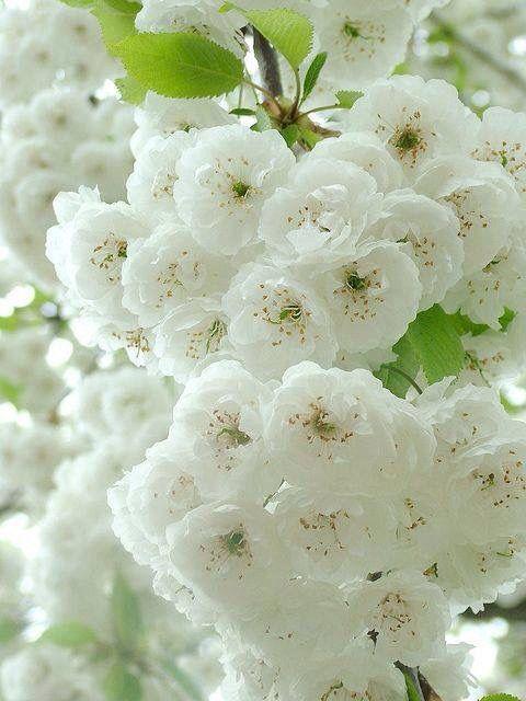 Blancas hermosas!