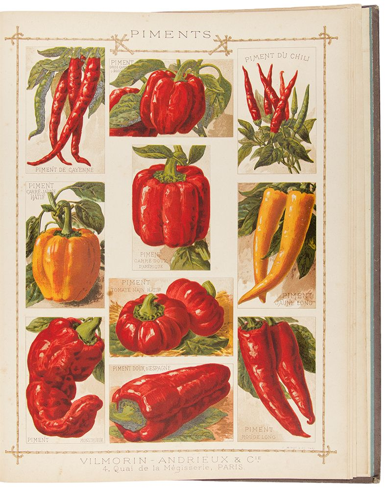 c1890 vilmorin 1 piment du cayenne 2 piment gros carr doux 3 piment du chili 4 piment. Black Bedroom Furniture Sets. Home Design Ideas