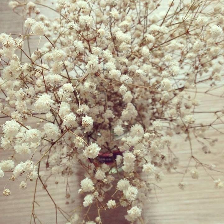 flores secas FLORES y PLANTAS Pinterest - flores secas
