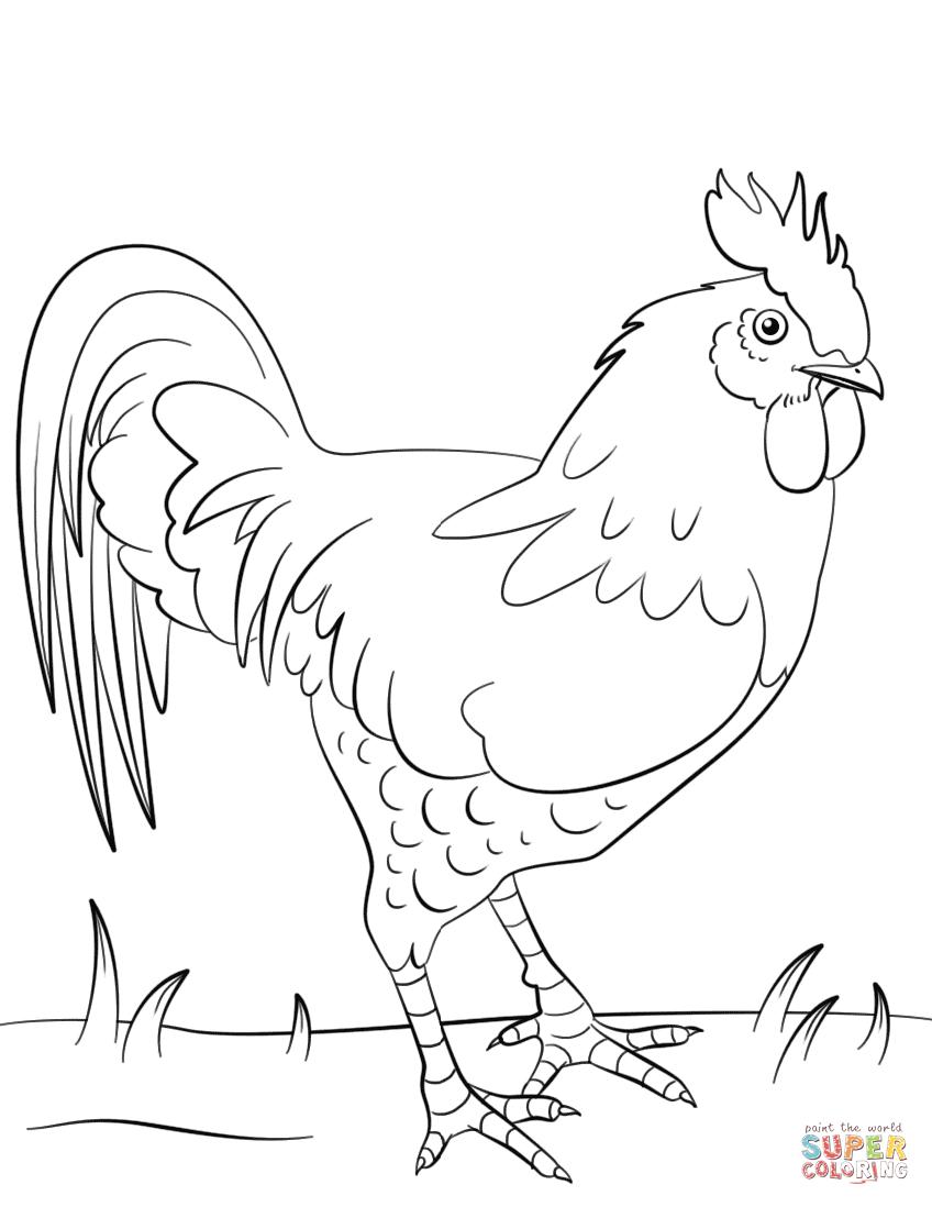 Dibujo de Gallo para colorear | Dibujos para colorear imprimir ...