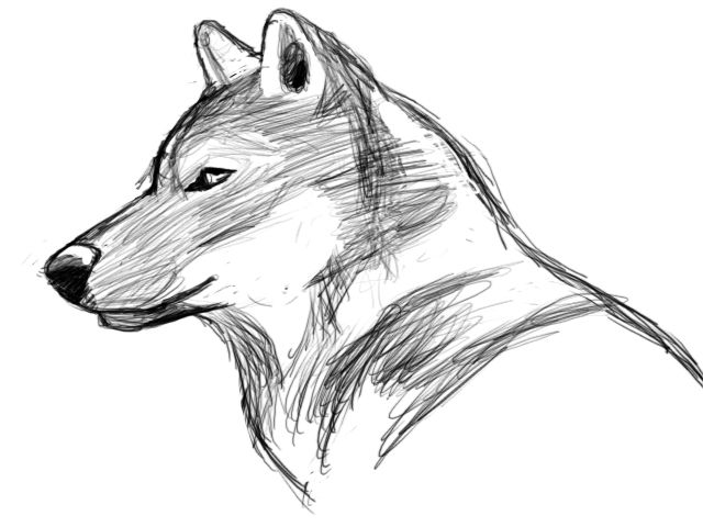 Wolf sketch creative inspiration