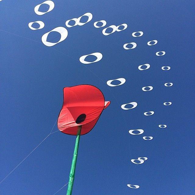 Coquelicot, cerf-volant et ciel bleu #cvchatel #cerfvolant #chatelaillon