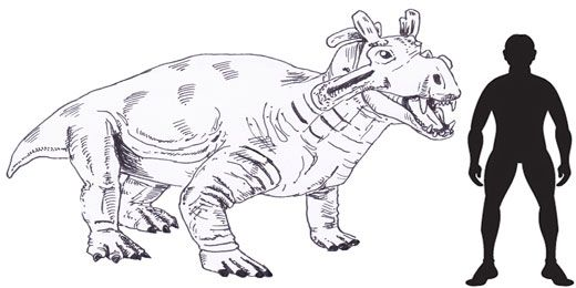 Image of: Png Estemmenosuchus Scale Drawing Extinct Animals Prehistoric Animals Dinosaur Discovery Dinosaur Drawing Roger Hall Scientific Illustration Estemmenosuchus Scale Drawing Extinct Animals Drawings