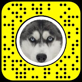 Husky Face Snapchat Lens Filter Dog Filter Husky Lenses Snapchat Husky Faces Lens Filters Husky