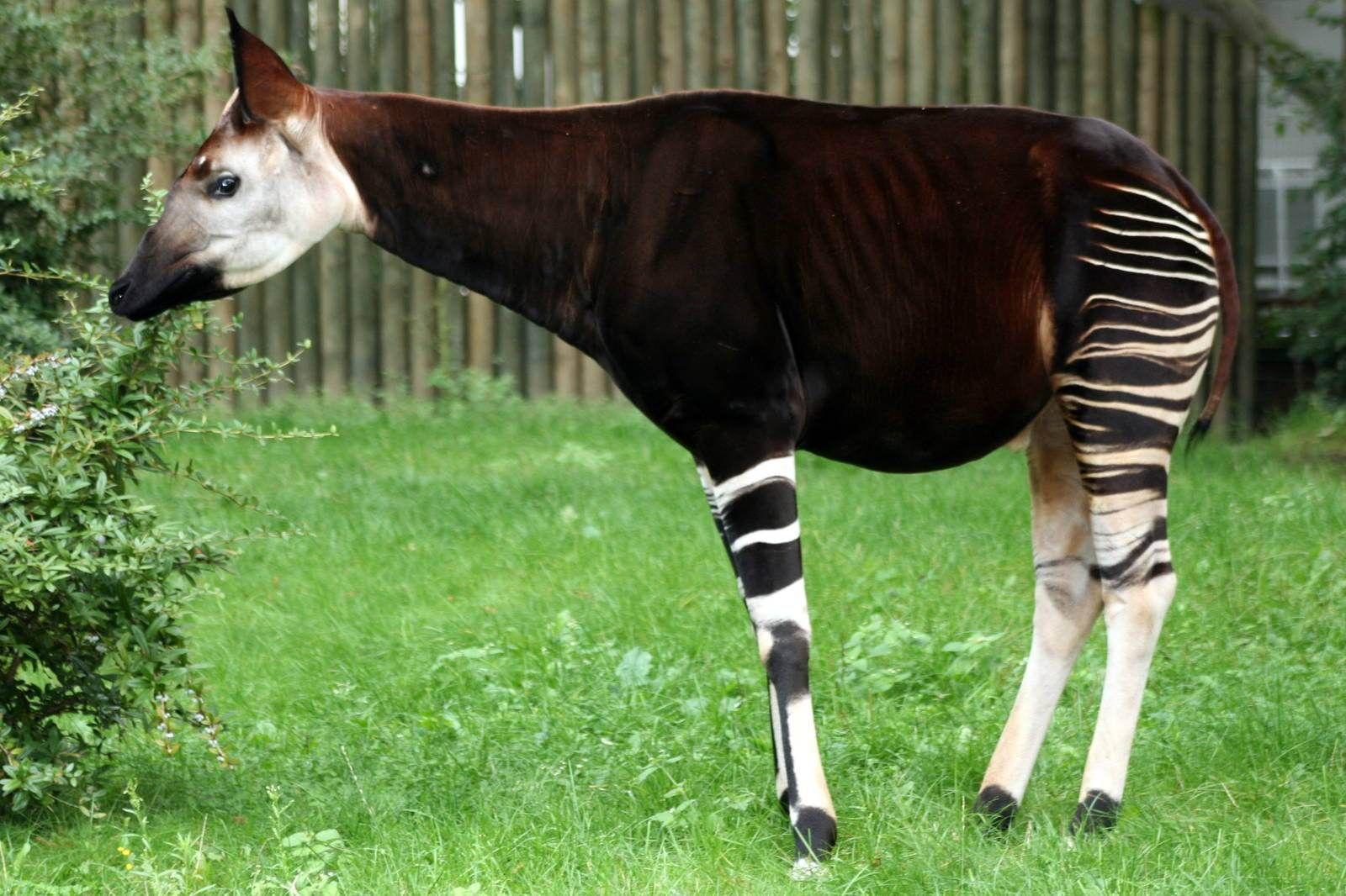 10 Strange African Animals (With images) Rare animals