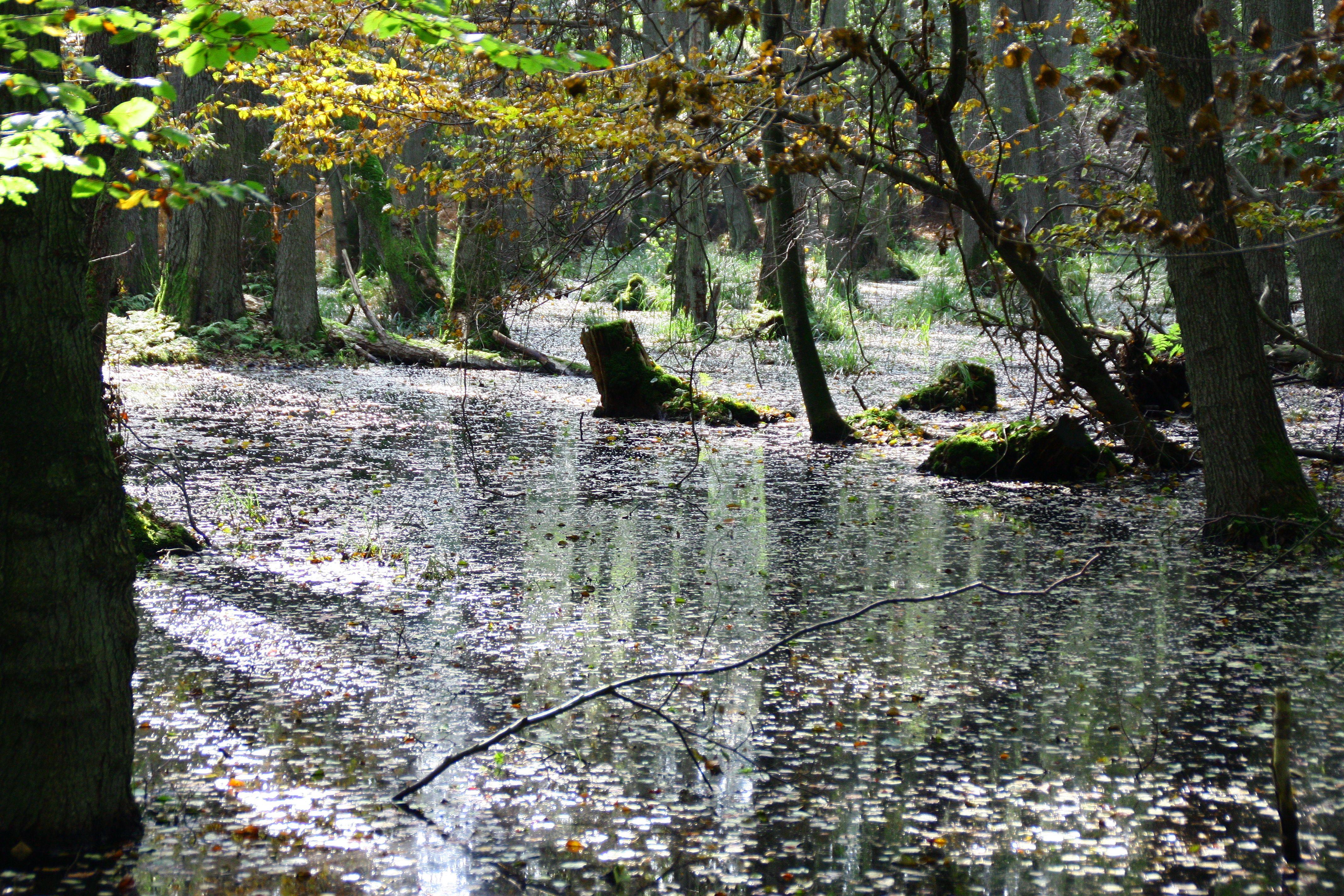 Fischland Darss Fischland Darss Ahrenshoop Ostsee