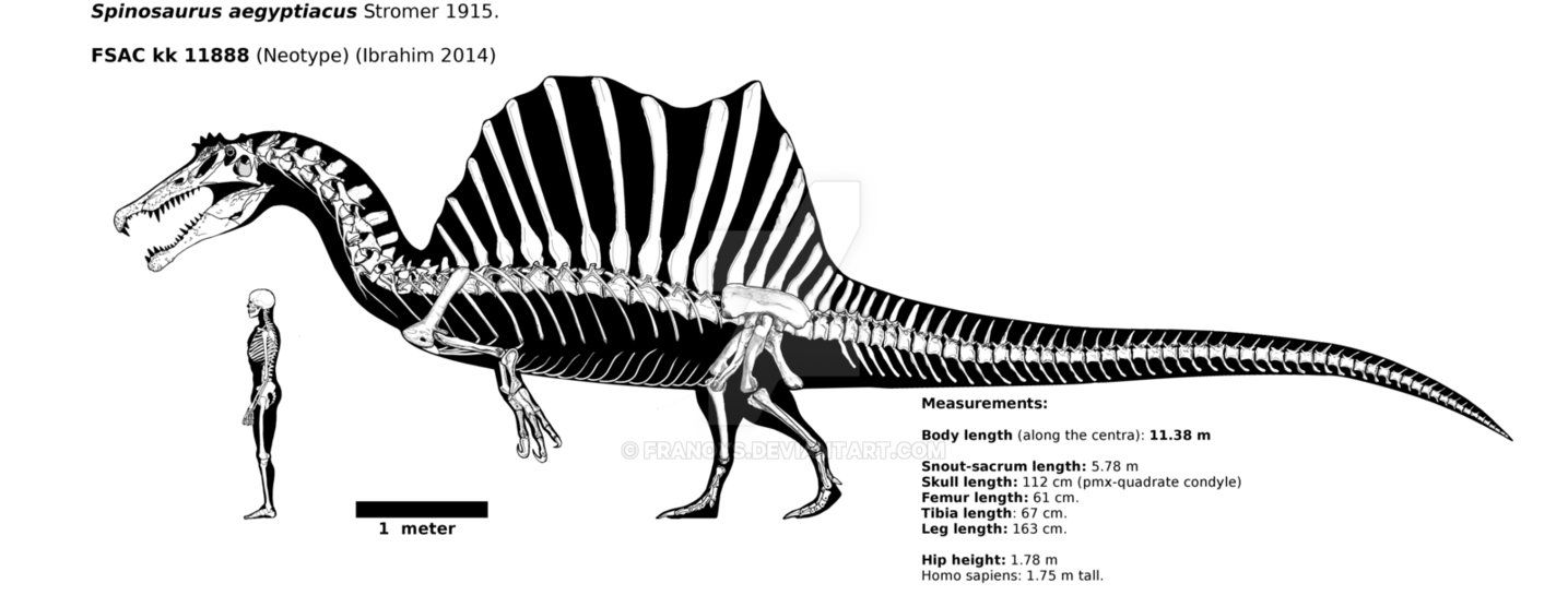 Spinosaurus Aegyptiacus Skeletal Fsac Kk 11888 By Https Franoys Deviantart Com On Deviantart Spinosaurus Spinosaurus Aegyptiacus Prehistoric Animals