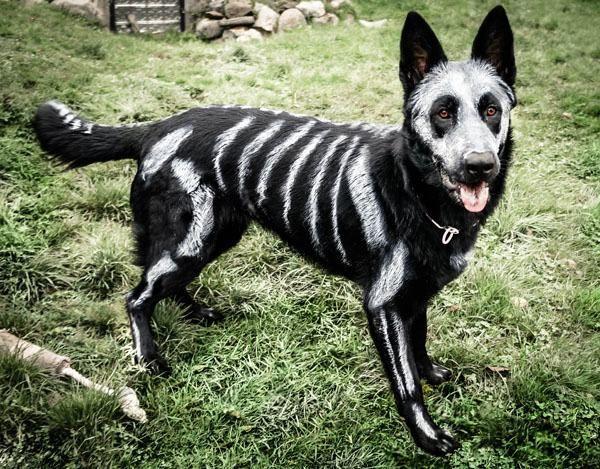 Halloween Costume Battle 53 Of The Spookiest Cutest Grumpiest