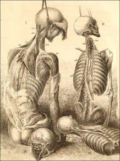 Peter McCandless, Author, Editor, Historian: Anatomy Illustrated, 1543-2007 (Warning:Some image...