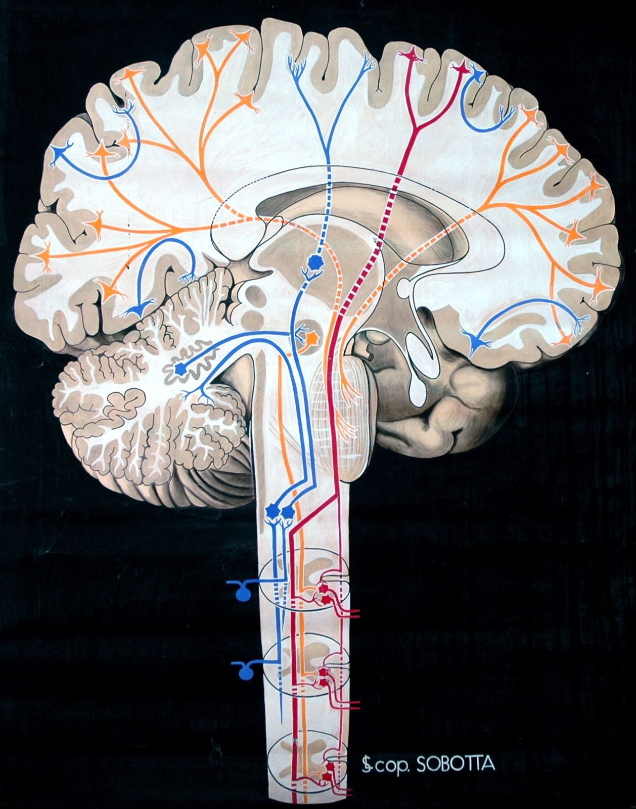 "egosumdaniel-od: "" Elisa Schorn ca. 1900 ""Nervensystem, zentral 7 ..."