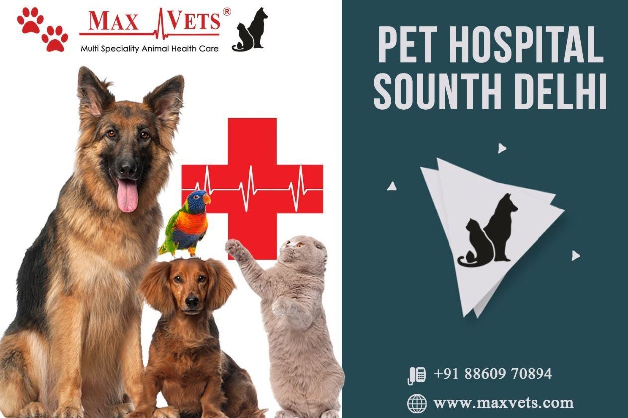 Pin by maxvets on Pet Hospital Pet health, Pets