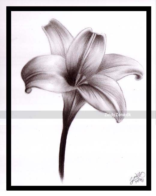 lily flowers drawings   Lily -   {Embroidery} PATTERNS ...